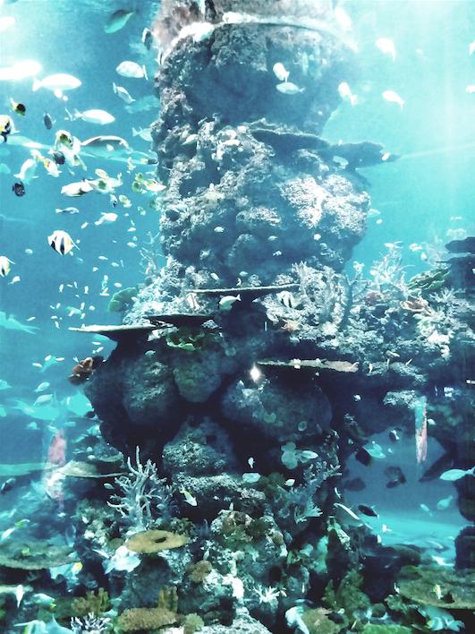 3.4 Sea Aquarium sentosa.png