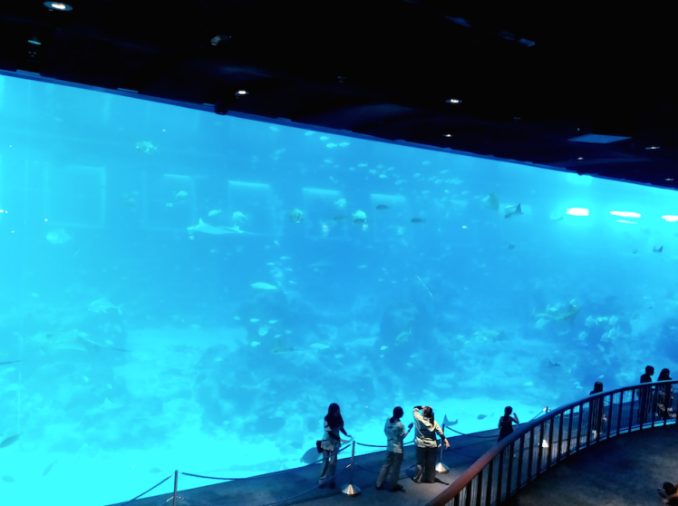 8.Sea Aquarium- gaint open sea habitat.png