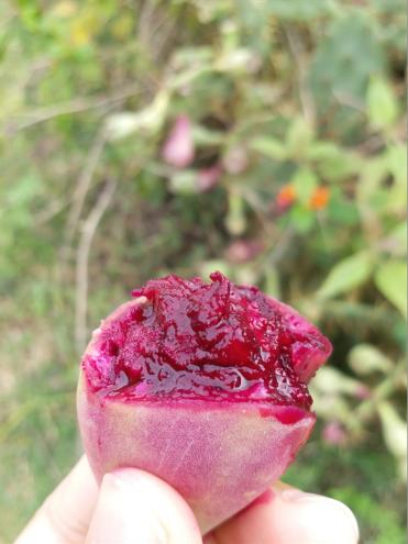 edible cactus fruit