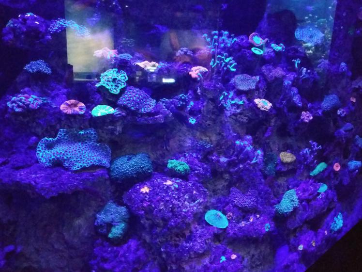 fluroscent corals