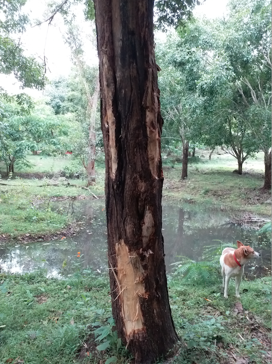 Jungle retreat.png