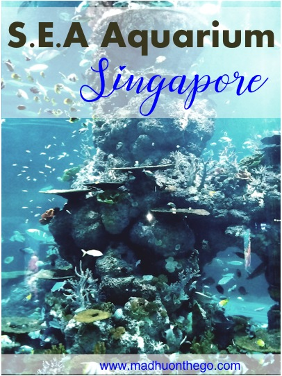 SEA Aquarium Singapore-Major highlights .jpg