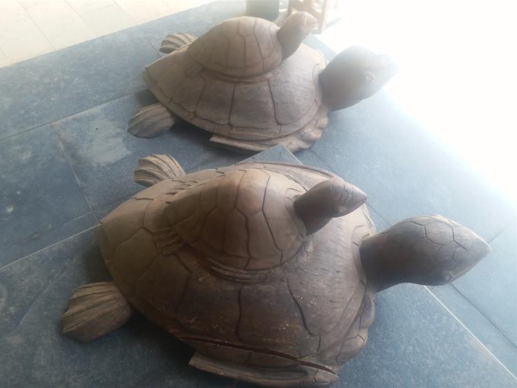 turtles, Goa.png