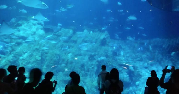 Aquarium ocean park.png