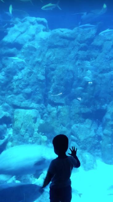 Sea Aquarium, Ocean park
