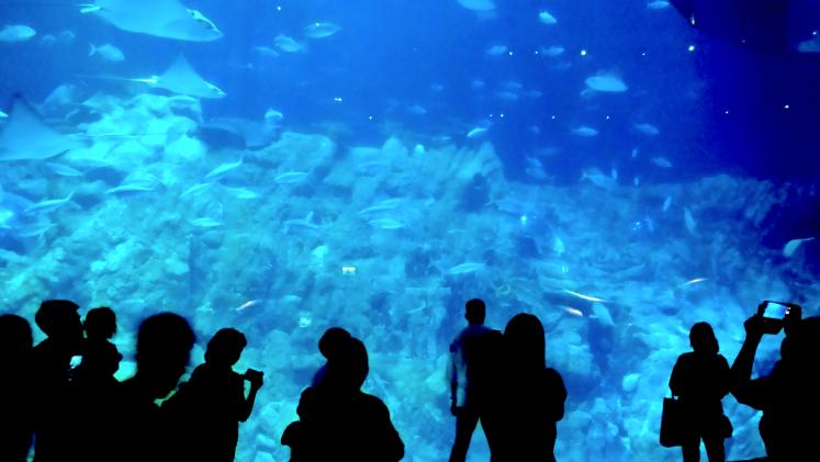 Aquarium Oceans park, hongkong.png