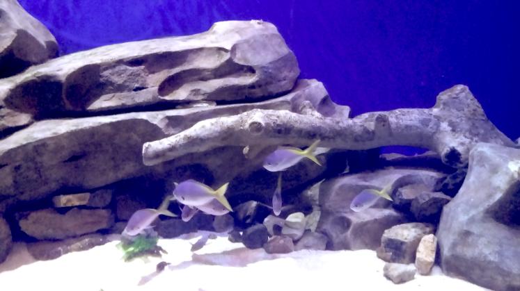 Aquarium, Oceans park hongkong.png